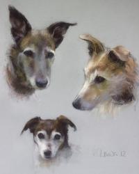 Johnson Dogs