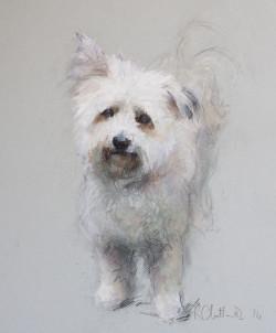 A pastel portrait drawing of Gracie - a Coton de Tulear cross Pomeranian dog