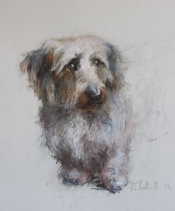 Pastel Portrait Drawing of  Mollie - a Dachshund cross Jack Russell dog