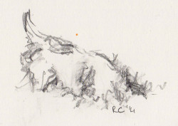 Pencil sketch of Jack Russell Terrier mousing