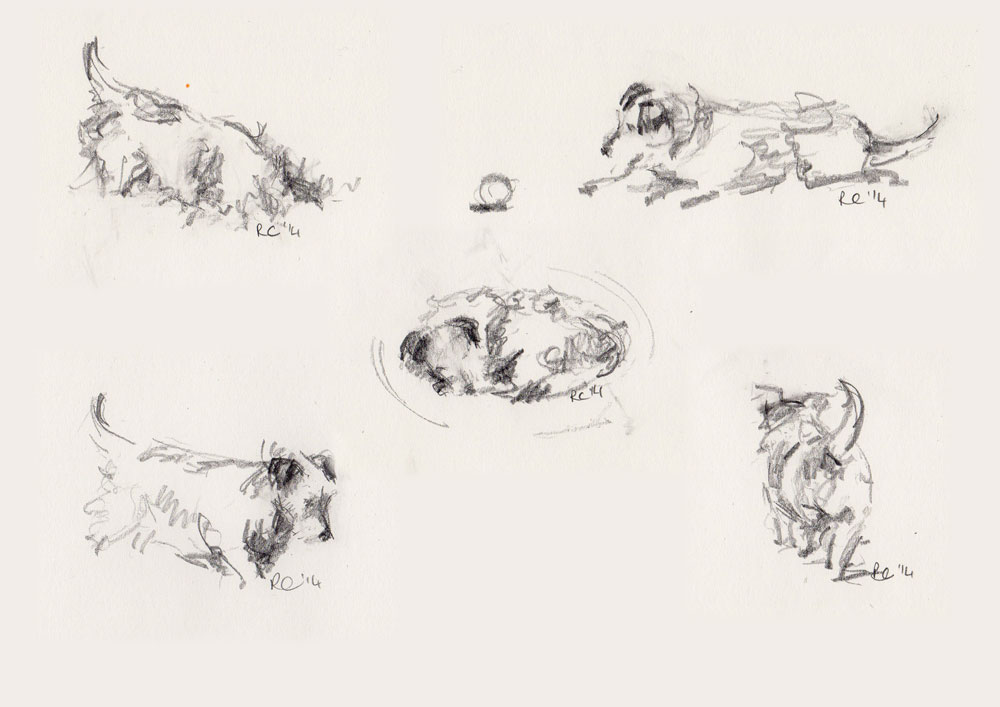 Five pencil sketches of a day in the life of Scrappy - a Jack Russell Terrier
