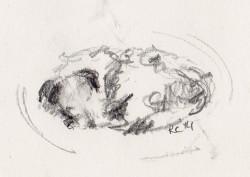 Pencil sketch of Jack Russell Terrier sleeping