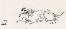 Pencil sketch of Jack Russell Terrier playing with a ball