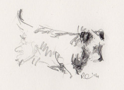 Pencil sketch of Jack Russell Terrier off on an important mission