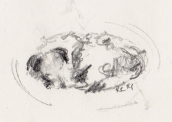 Pencil sketch of Jack Russell Terrier sleeping